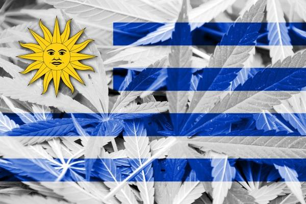cannabis regulation in uruguay