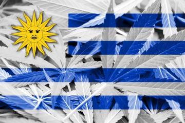 cannabis regulation in uruguay